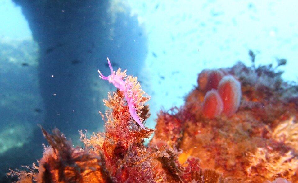 Sites de plongée | S'Algar Diving, Menorca