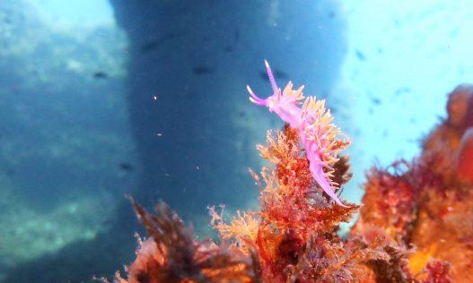 Dive sites in Menorca. Visit the best sites with S'Algar Diving