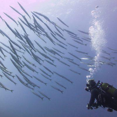 Inmersiones en Menorca
